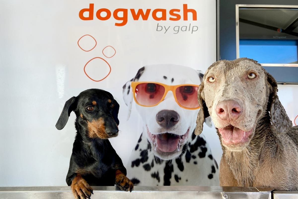 Galp testa serviço de lavagem para cães na zona de Lisboa