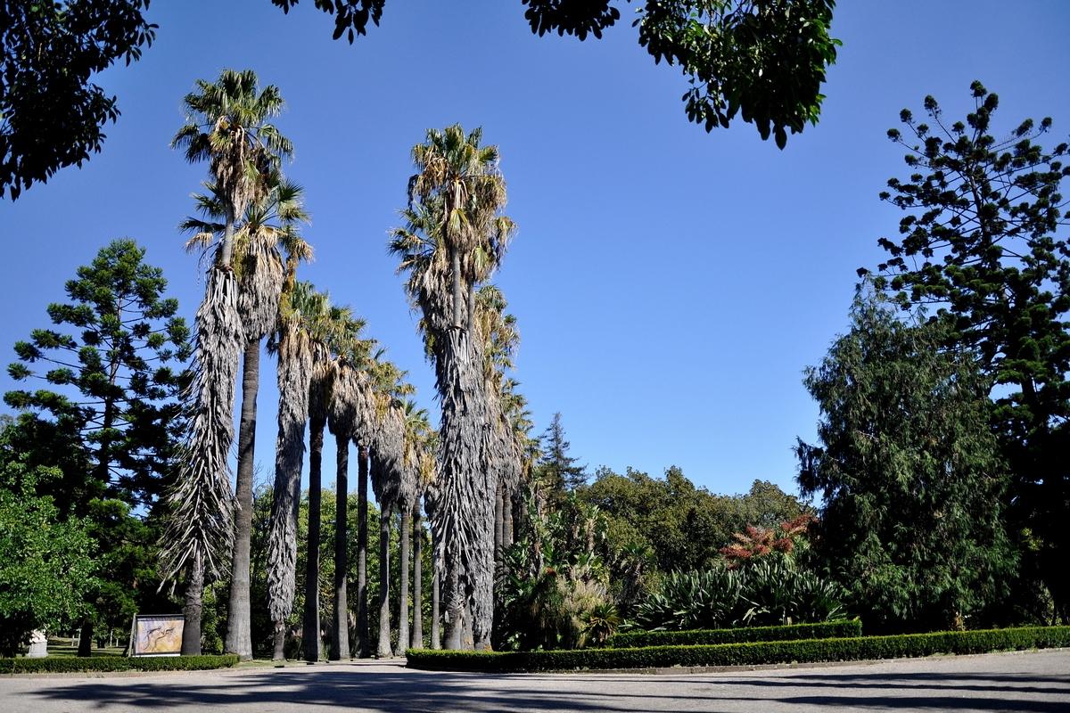 Jardim Botânico Tropical reabre ao público com festa